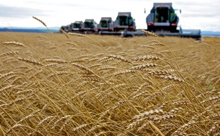 урожай, комбайн, пшеница