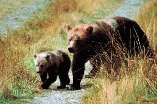 Югра, зоопарк, медведи