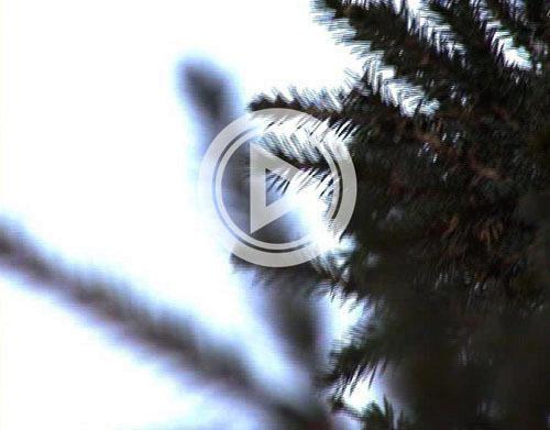 праздник, Югра