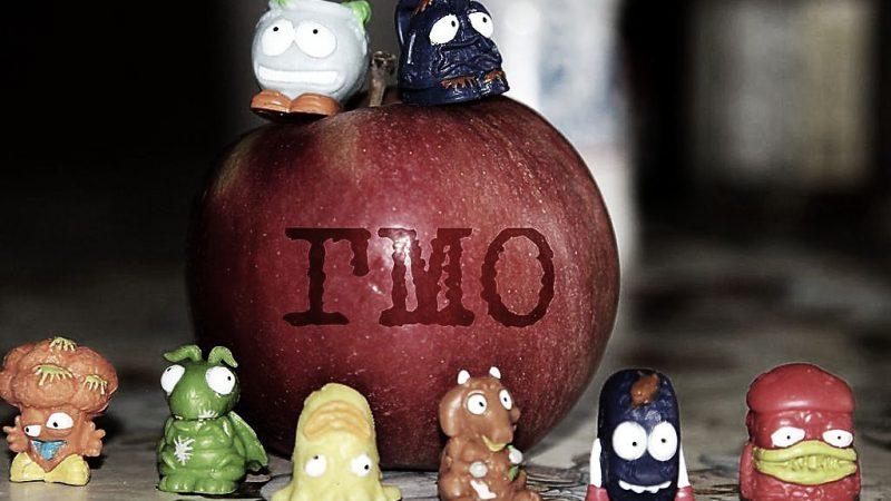 Совет Федерации готовит законопроект о полном запрете на производство и ввоз в Россию генетически модифицированных пищевых продуктов (ГМО-продуктов)