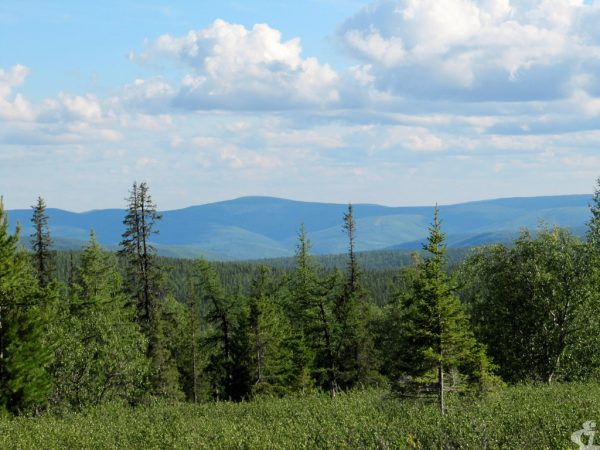 Урал. Тайга и горы. Зелёное и Синее. Как флаг Югры