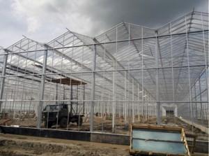 В деревне Ярки готовится к запуску овощная ферма по производству огурцов, помидоров и салатных культур по финско-германским технологиям