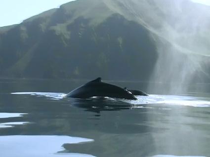 китообразные