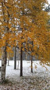 Попытка поймать последние листочки на деревьях. Ветер их почти все уже скинул.