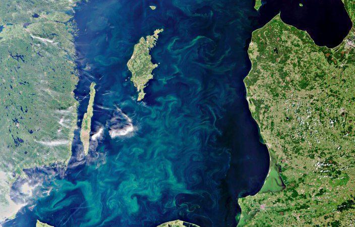 Балтийское море летом. Цветные разводы на поверхности моря - сине-зеленые водоросли