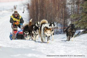 Каюрам предстоит преодолеть тысячу километров по тайге и тундре до села Оссора Карагинского района