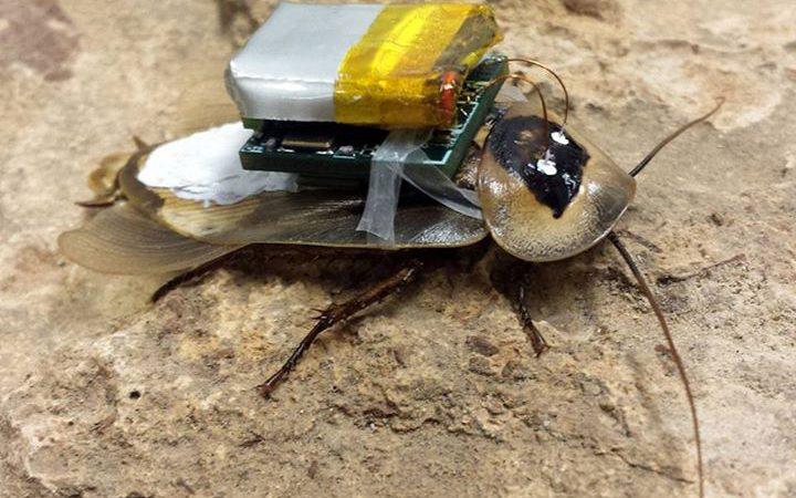 Инженеры подключили компьютер к таракану