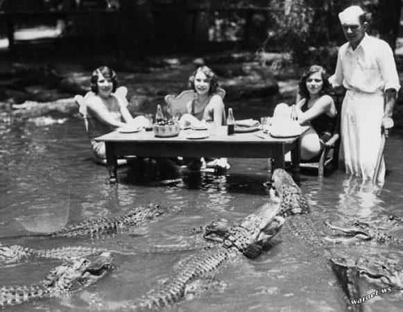 крокодилы, экстрим, пикник, риск