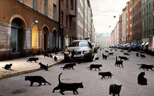чёрные кошки, кот