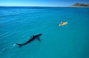 акула, опасность, море, лодка, тропики