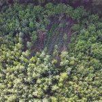экология, погода, лес