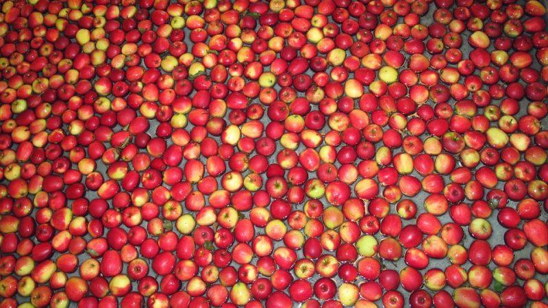 яблоки, еда, фрукты, АПК