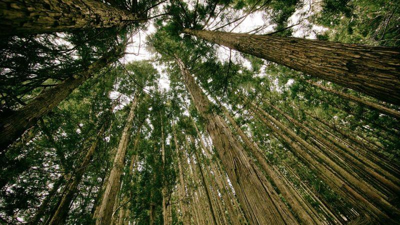 лес, экология