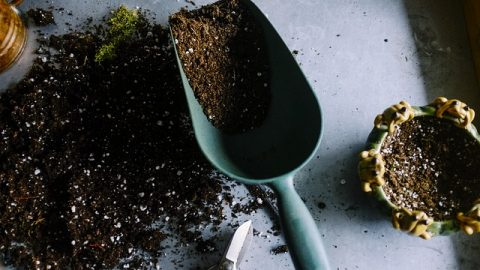 садоводство, земля, цветы, субстрат