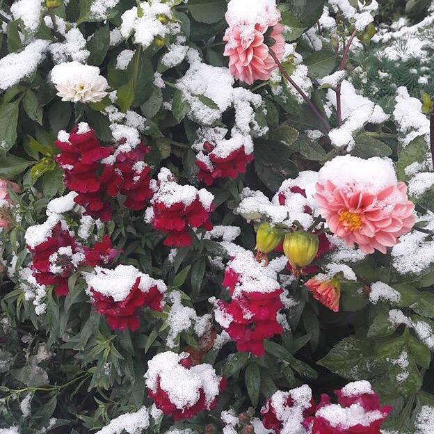 снег, цветы, Челябинск
